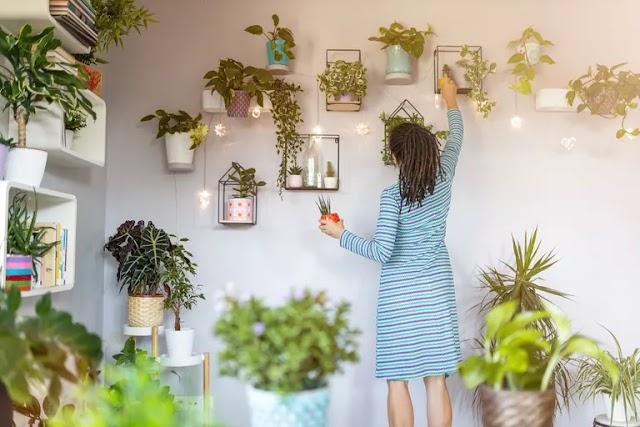 Τα φυτά στο σπίτι βελτιώνουν την ψυχική υγεία στη διάρκεια του lockdown