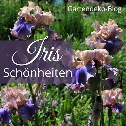 Iris Schönheiten