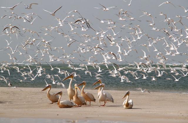 LE PARC NATIONAL DE LA LANGUE DE BARBARIE : Parc, animaux, visite, tourisme, sauvage, oiseaux, LEUKSENEGAL, Dakar, Sénégal, Afrique