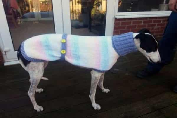 Woman Knits Adorable Sweaters For Rescued Dogs, So Popular She Stopped Her Day Job