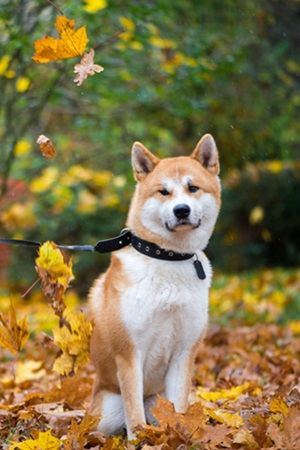 كيفية تدريب الكلاب على حراسة المنزل