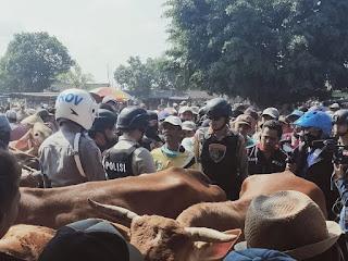Antisipasi Maraknya Pencurian Sapi, Kapolres Sidak Pasar Pathok Sapi