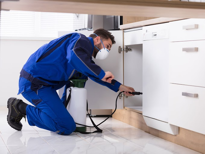 Pest Control Service: 6 Things to Expect From Your First Visit