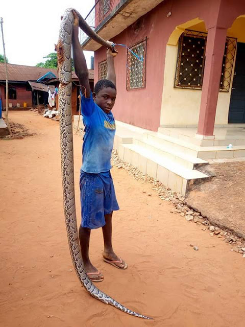 Photos: 13-year- old boy kills huge python in Anambra