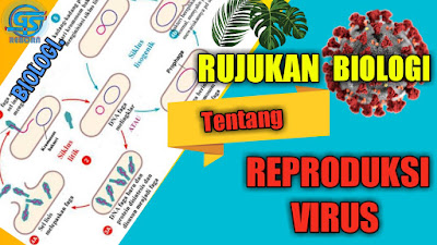 reproduksi virus, replikasi virus