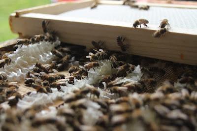 Πωλείται μελισσοκομικός εξοπλισμός και μελίσσια