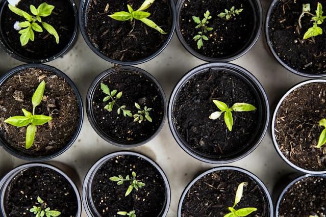 Small Vegetable Gardening ideas