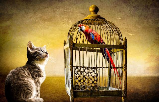 kandang-burung-001