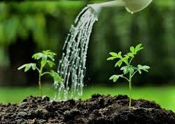 Whole Plant Water Relations and Transpiration The quantitative significance of transpiration