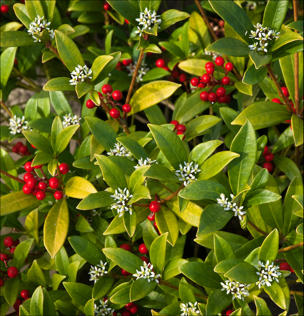 Potager Garden Blogs: A Garden Blog: POTAGER, CHERRIES AND AND HAIL