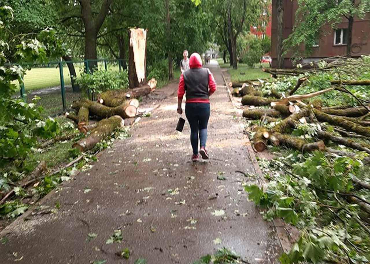 Glābēju attīrīts gājēju ceļš Juglā uz kura nokrita zibens nogāzts koks
