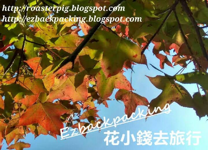 麥理浩徑10段紅葉