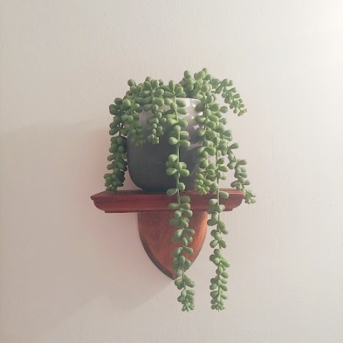 Repurposed Bronze Baby Shoe Shelf