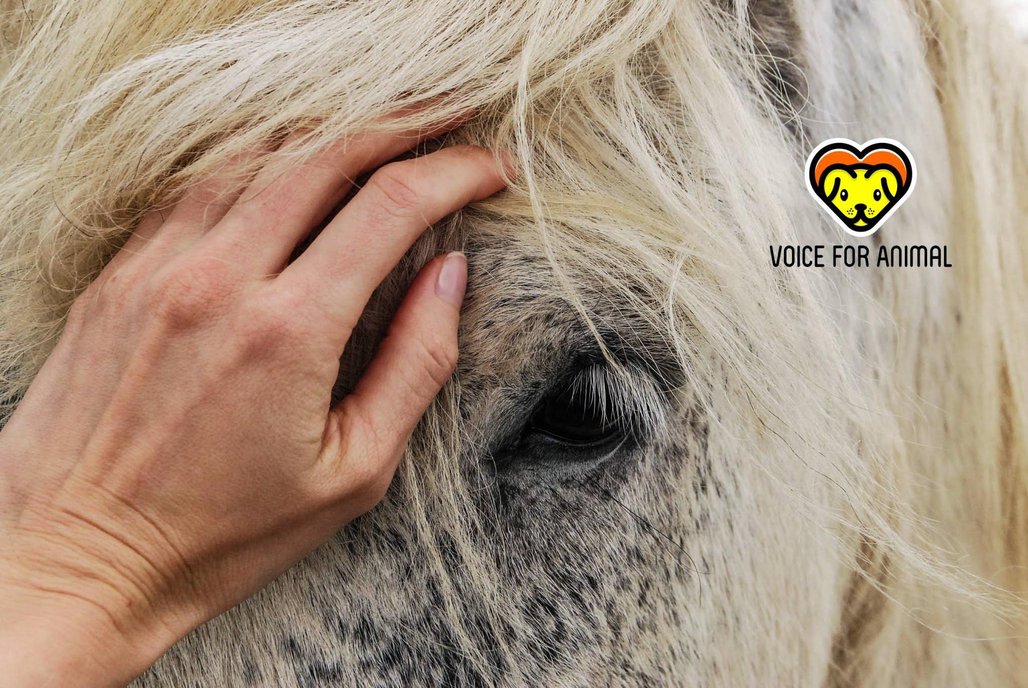 Animal wefare, animal rights