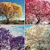 ZPP Meio Ambiente: A primavera e o meio ambiente
