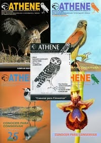 Descarga en PDF la revista Athene