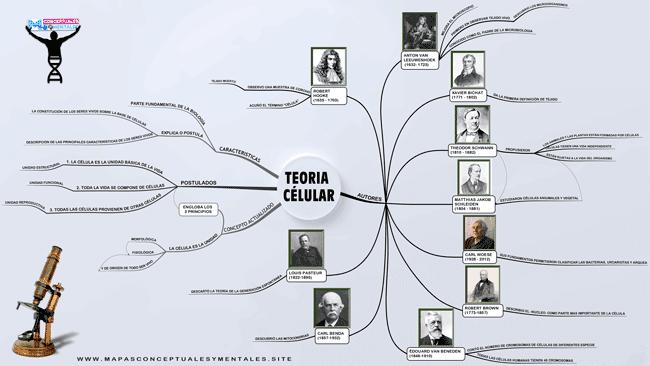 Mapa mental de la teoría celular con sus postulados y autores