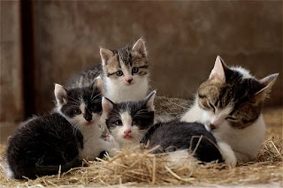 jenis makanan yang disukai kucing