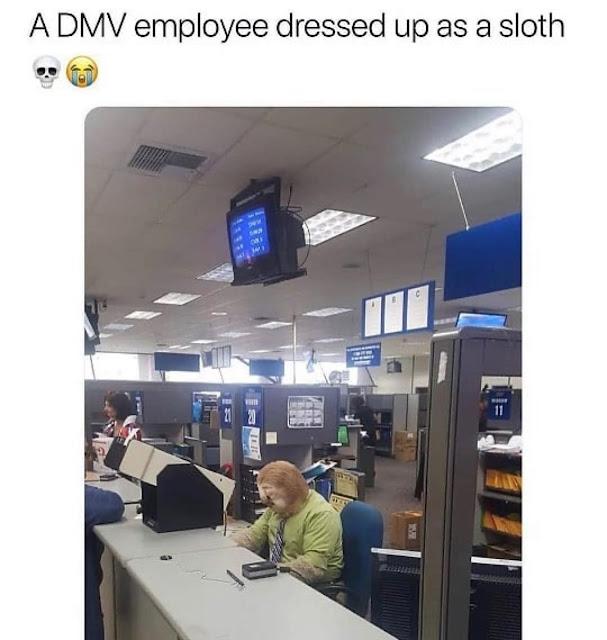 dmv employee dressed up as a sloth - A Dmv employee dressed up as a sloth e A