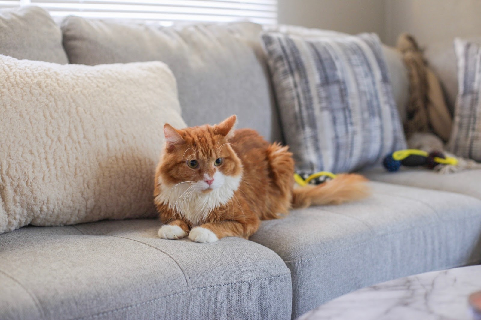Life Update and What I'm Currently Loving This Fall - Simba the Cat