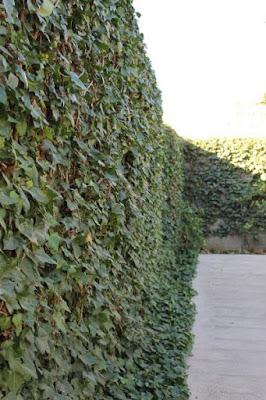muro de hiedra