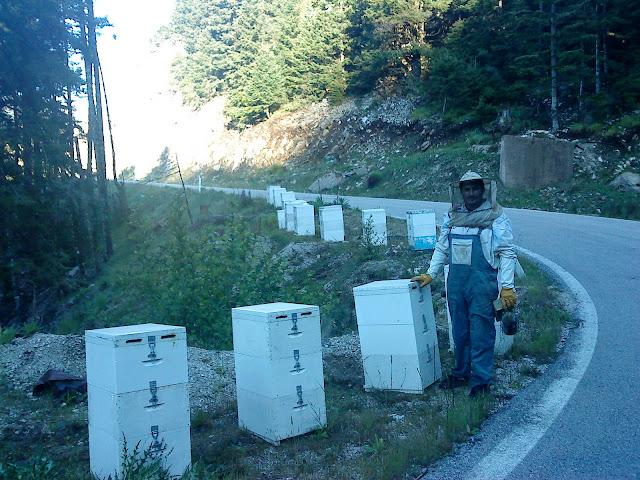 Κάθετη ανάπτυξη των μελισσιών