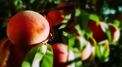 Manfaat Peach