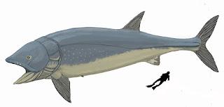 Tamaño Leedsichthys problemticus comparado con un ser humano