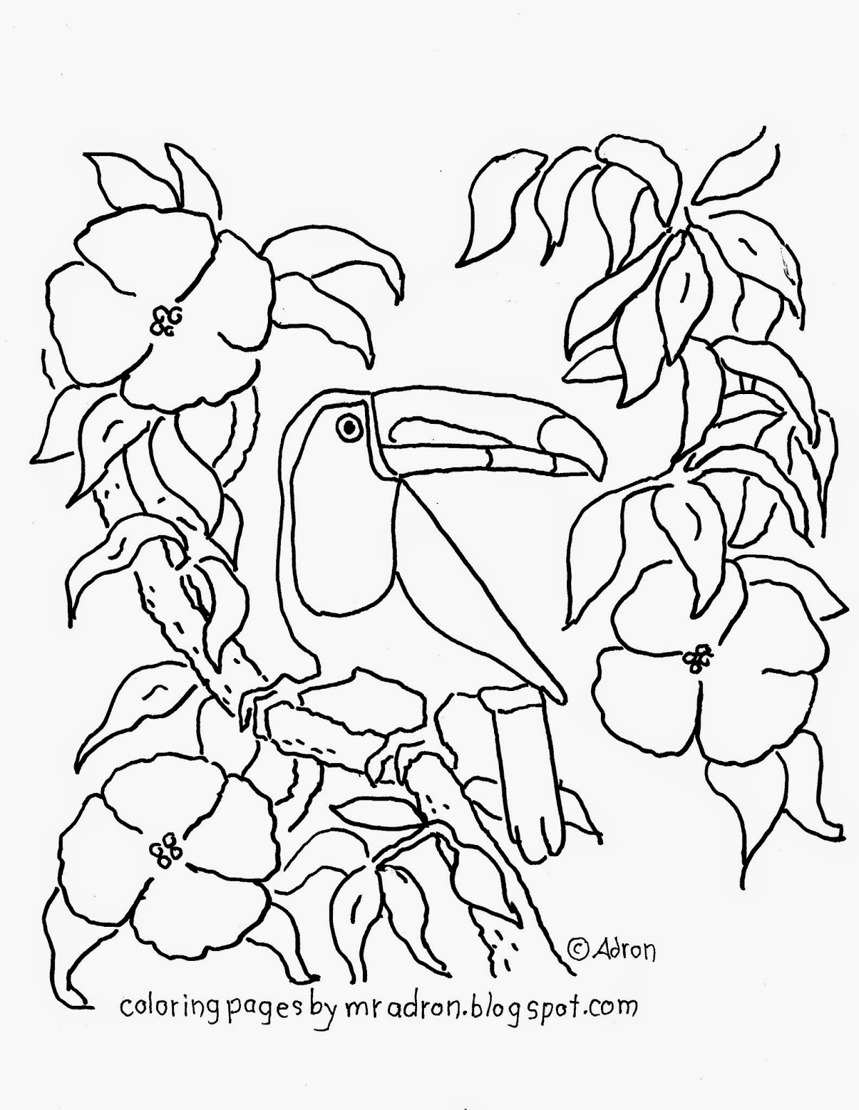 coloring pages for kids by mr adron free printable toucan