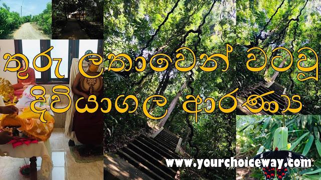 තුරු ලතාවෙන් වටවූ - දිවියාගල ආරණ්ය ☸️🙏🍃 (Diviyagala Aranya Senasanaya) - Your Choice Way