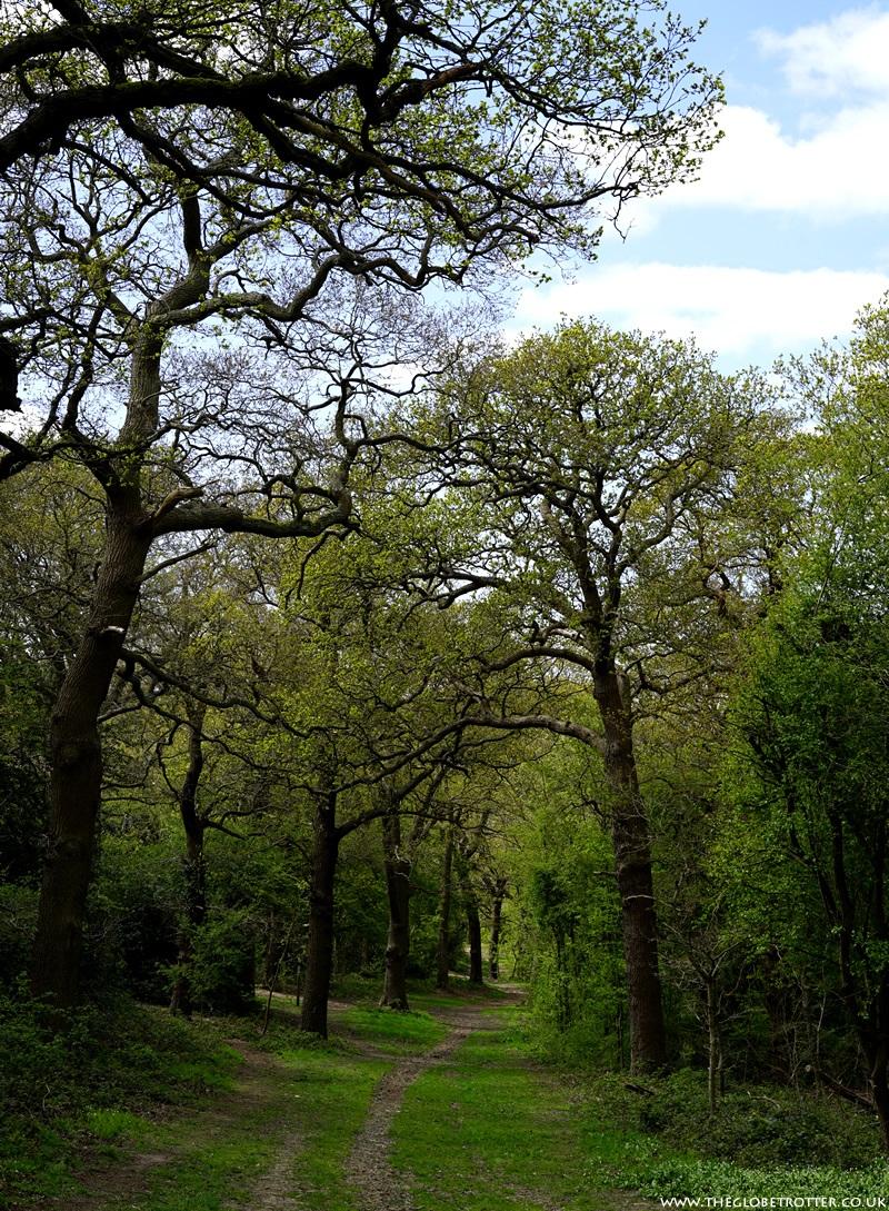 Walkign path near Gilwell Park