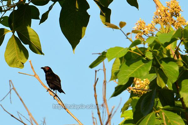 Piasau Birding