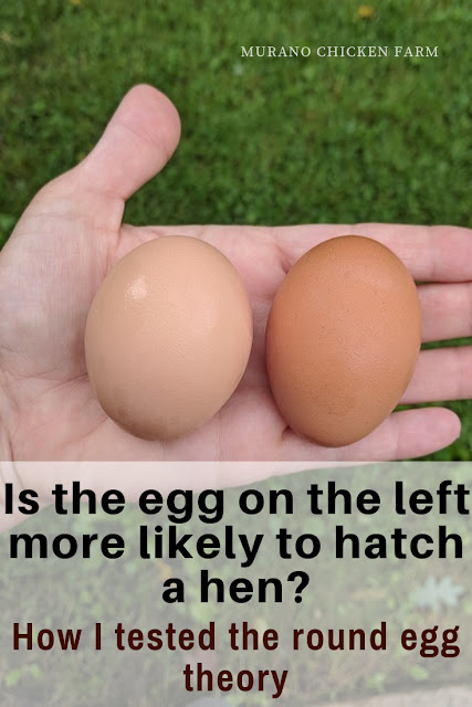 Round eggs hatch female chicks