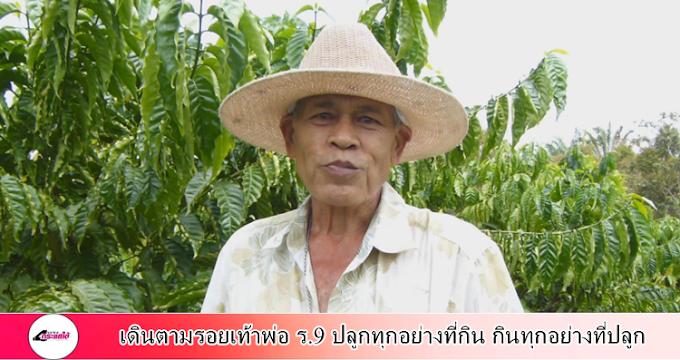 กระบี่-เกษตรกรอำเภอลำทับทำการเกษตรแบบผสมผสานตามรอยเท้าพ่อ ร.9 ปลูกทุกอย่างที่กิน กินทุกอย่างที่ปลูก