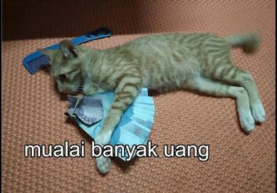 "Meme Lucu ""Kisah Hidup Kucing Oren"" yang Menginspirasi dan Ngakak"