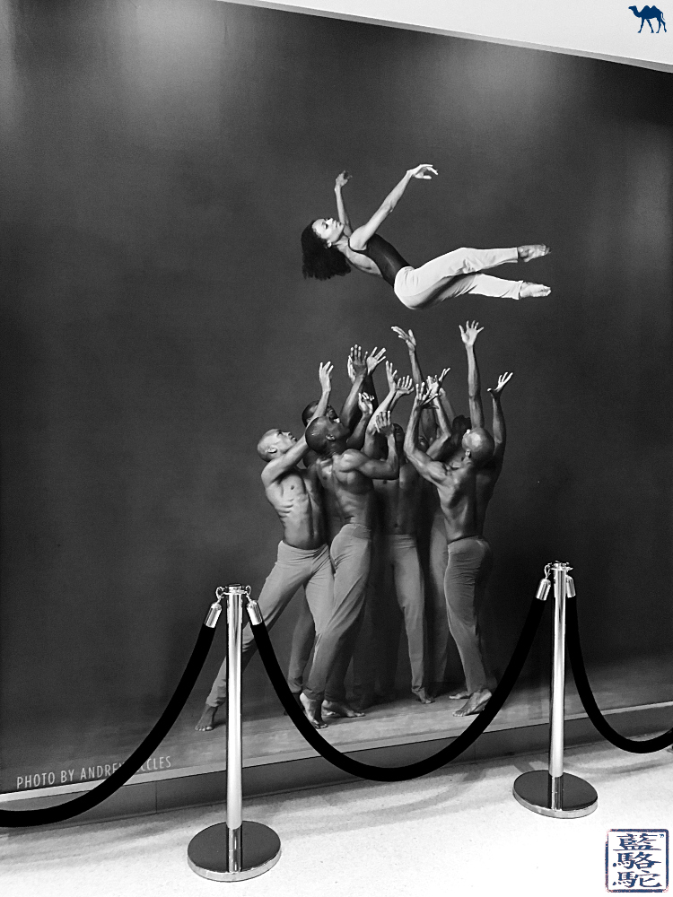 Le Chameau Bleu - Sublime photo  des danseurs de la compagnie Alvin Ailey New York