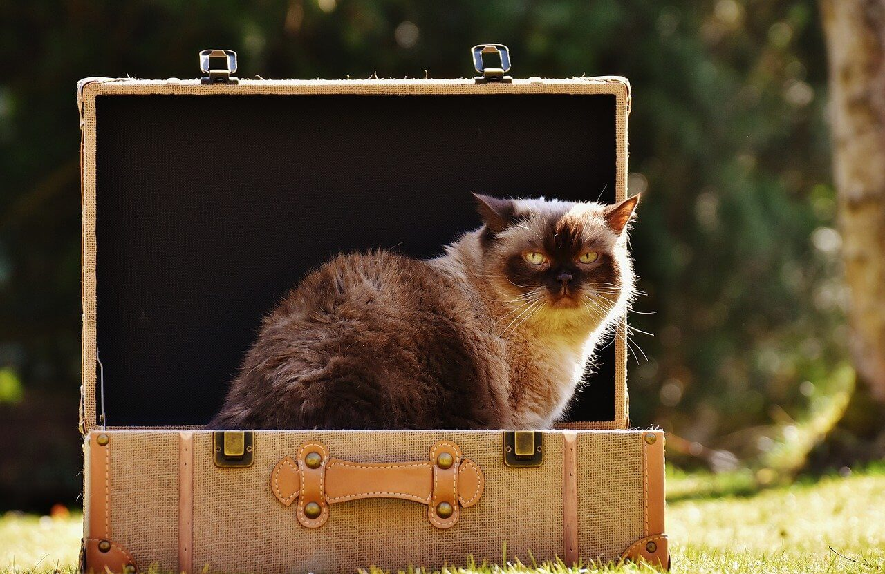Easy Travel Tips For People Taking Their Cats With Them
