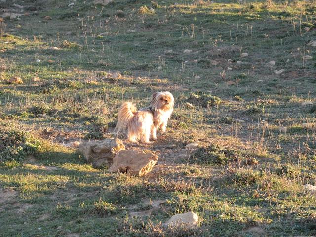 auf der Halbinsel Punta de n'Amer auf Mallorca fühlte sich auch unser Hund Bronco wohl