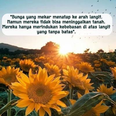 Quote Bunga Matahari
