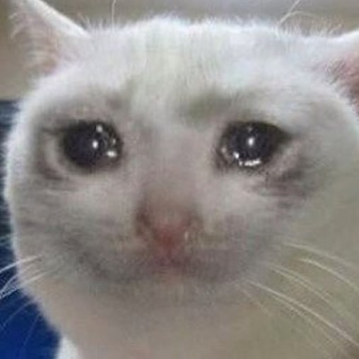 100+ Crying Cat Meme & Sad Cat Meme in 2020