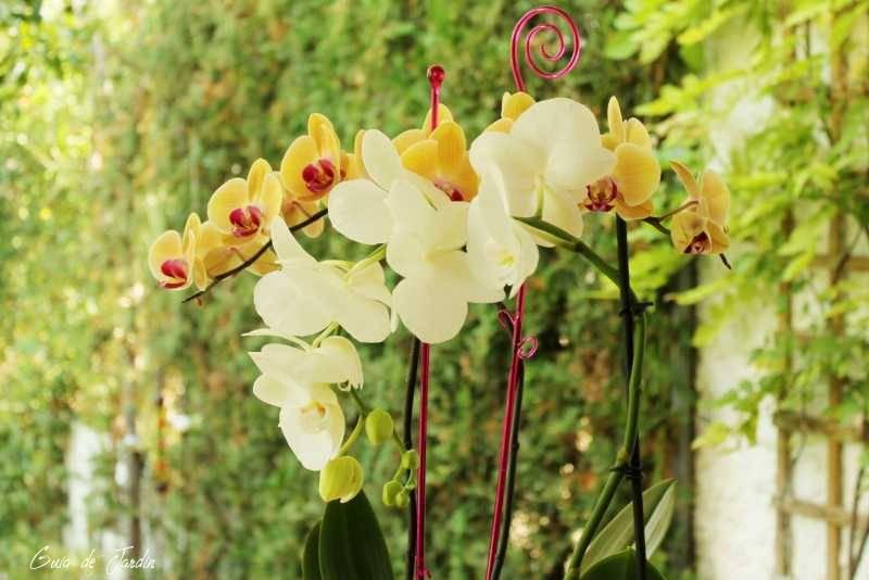 Orquídeas en mi jardín