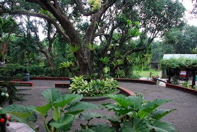 Jardin de Miramar's Terraza