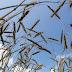 مصر قامت بشراء 300 ألف طن من القمح في مناقصة عالمية