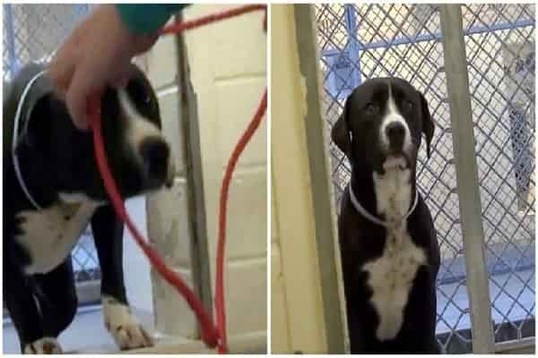 Shelter Pet's Reluctant To Leave Kennel Til He Figures Out He's Never Returning