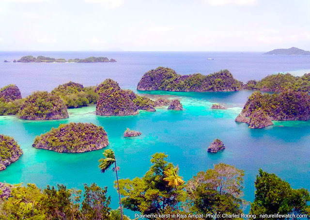 Vacation tour in Raja Ampat
