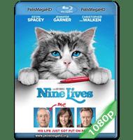 MI PAPÁ ES UN GATO (2016) 1080P HD MKV INGLÉS SUBTITULADO