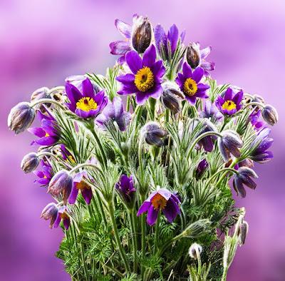 zakwitły kwiaty_alicja Rupińska