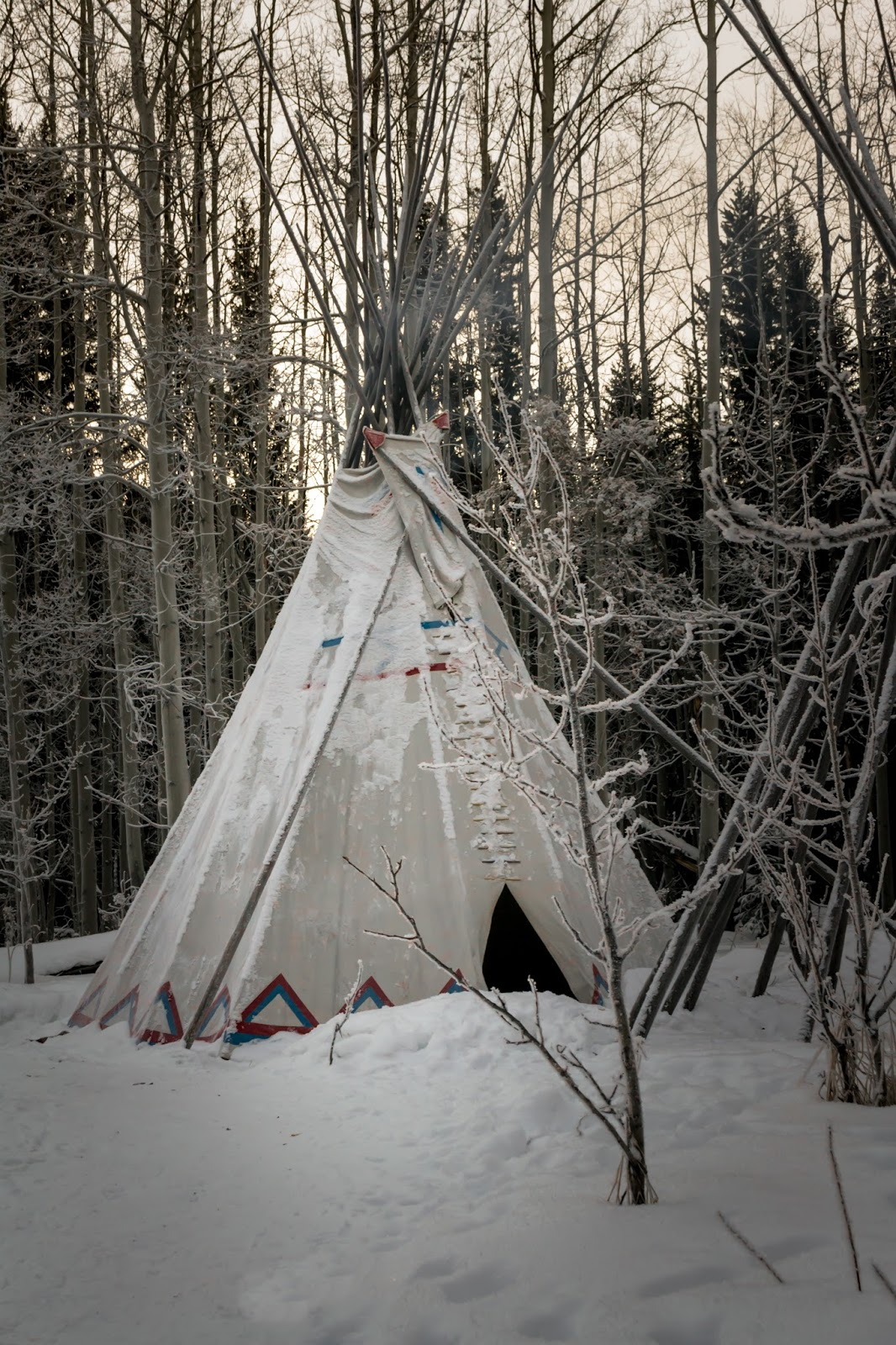 Dogsledding in Kananaskis near Calgary in winter and a Teepee
