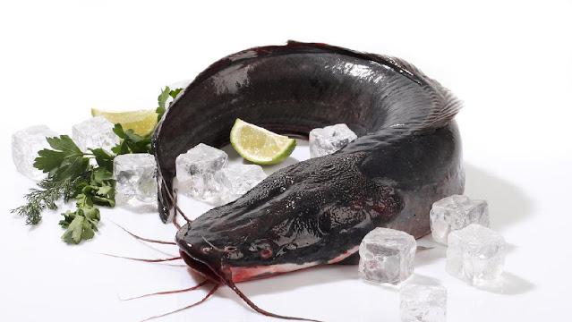 Jual Ikan Lele Bibit & Konsumsi Palembang, Sumatera Selatan Terpopuler