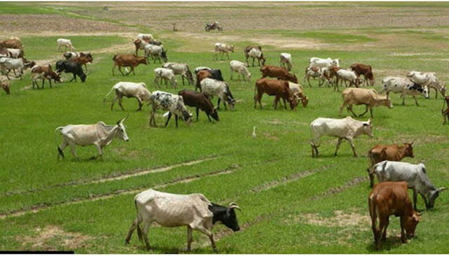 """Alt: = """"photo of cattle grazing on field in a ranch"""""""